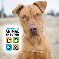Cheyenne Animal Shelter logo